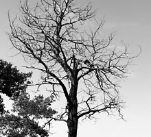 Dead tree in monochrome by Jim Sauchyn