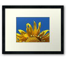sunflower on the blue sky background Framed Print