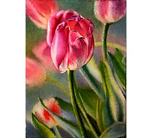 Spring Breeze - Watercolor Painting of Pink Tulips Photographic Print