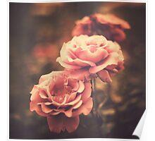 Pink Vintage Roses  Poster