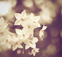 Vintage White Flowers by Andreka