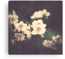 Vintage Pink Flowers Canvas Print