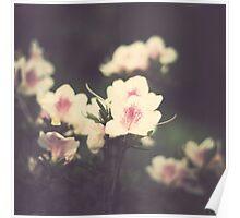 Vintage Pink Flowers Poster