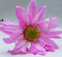 Pink by Annie Underwood