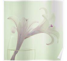 Vintage Pink Flower Poster