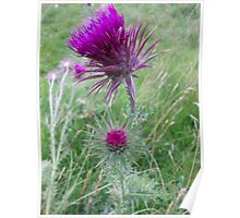 King of thistles Poster