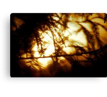 Through the Trees does Burn my Love  Canvas Print