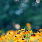 Black Eyed Susan by EkaterinaLa