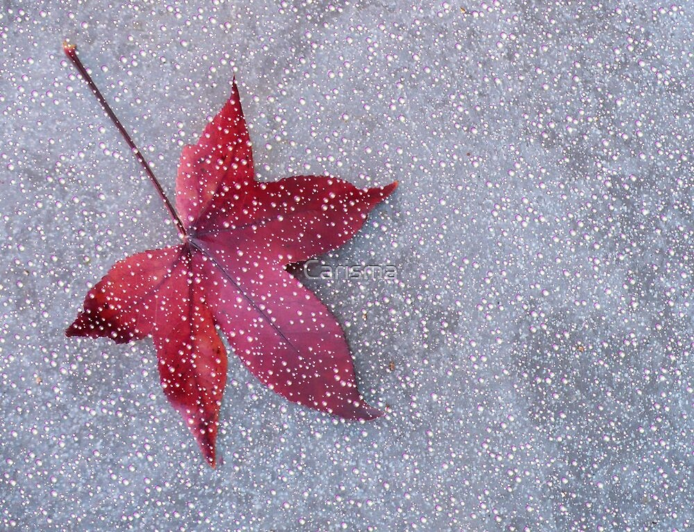Autumn's last.... by Carisma