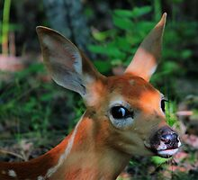 Fawn Profile by Larry Trupp