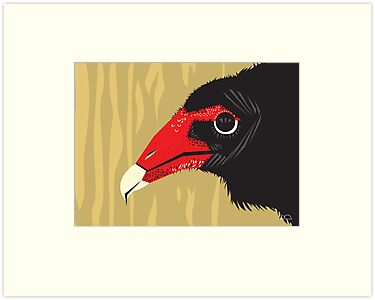 Crikey the Turkey Vulture by David Orr
