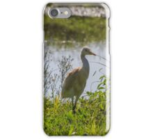 Cattle egret walking on the green grass. iPhone Case/Skin