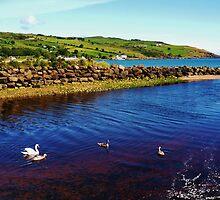 Children of Lir - Sea of Moyle by Sean McAughey
