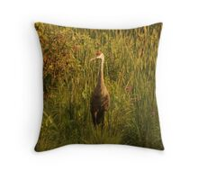 Sandhill Crane Standing on Shoreline Throw Pillow