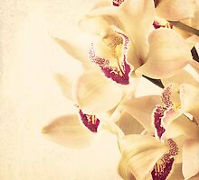 Vintage Orchids  by Andreka