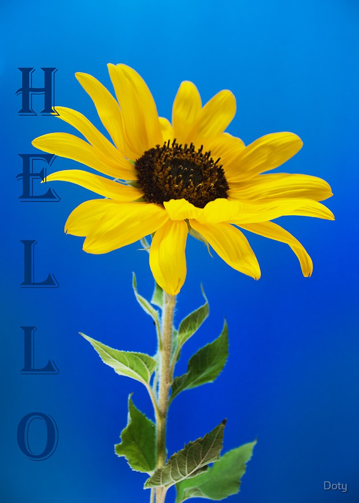 Hello by Doty