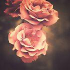 Pink Vintage Roses by Andreka