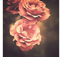 Pink Vintage Roses Photographic Print