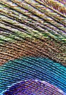 Peacock Feather Macro by Debbie Pinard