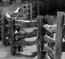 Against the Fence by Stacy Brooks Photography