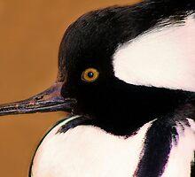 Merganser It's a Duck's Life by Paulette1021
