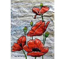 Musical Poppies Photographic Print