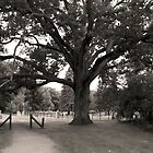 Cemetery Tree by Joanne Rawson