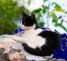 cat laying on top of a wall by ezdrifter
