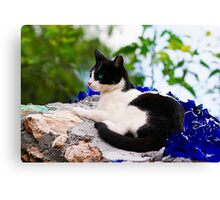 cat laying on top of a wall Canvas Print