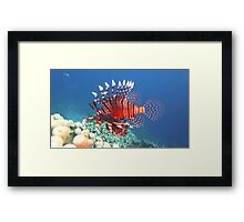 Lion Fish - So Painful Framed Print