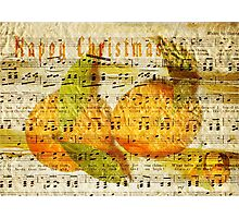 Darling Clementines for Christmas Photographic Print