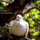 NEW DAY-NEW BEGINNING by PALLABI ROY