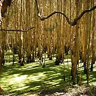 Ghost Gums in Green by wysiwyg-aust