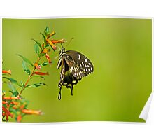 Hang In There Buddy Butterfly Poster