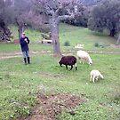 Traditional Shepherd by iosifskoufos