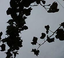 Grey Shadows Of Leaves by iosifskoufos