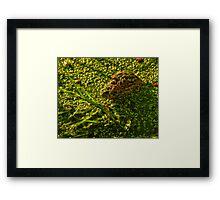 Gator in Duckweed Framed Print