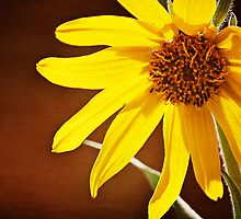 Yellow Daisy by photecstasy