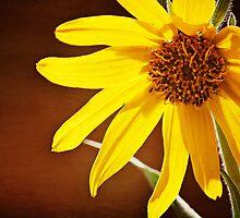 Yellow Daisy by photecstasy