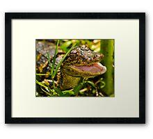Gator in the Grass Framed Print