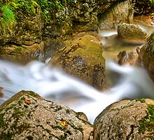 Wild Water  by Delfino