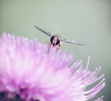 bzzzz by syoung-photo