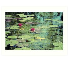 Water Lilies Pond Art Print