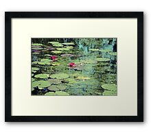 Water Lilies Pond Framed Print