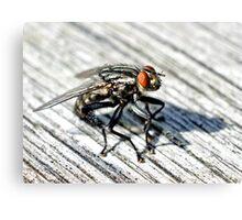 Flesh Fly Canvas Print