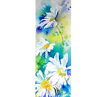 Tall Daisies Photographic Print