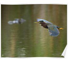 Green Heron & Gator Poster