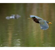 Green Heron & Gator Photographic Print