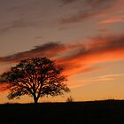 Sunset Tree by PixByNancy