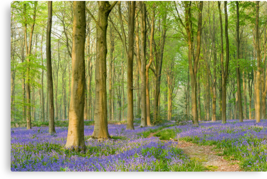 Bluebell Carpet III by Chris Tarling